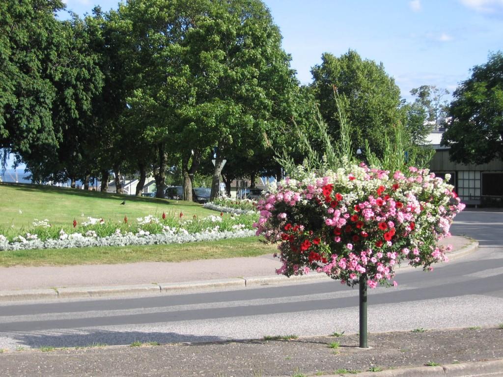 Plantering i Hjo med Weibulls rabattjord
