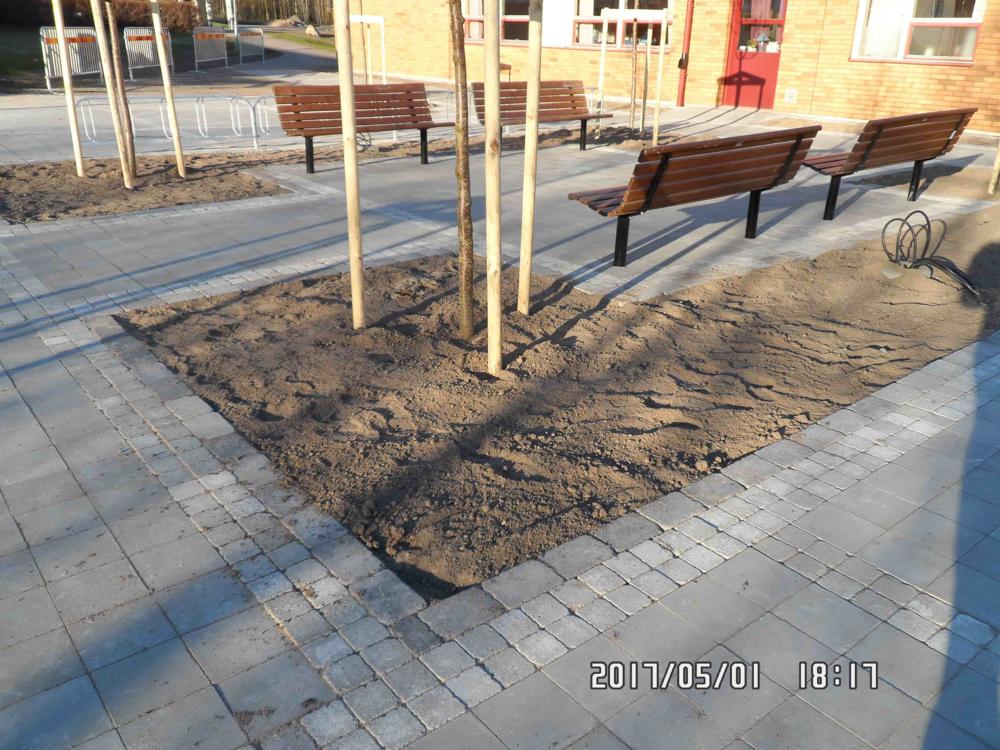 Växtjord plant, Skanska entreprenad Lundsbrunns skola