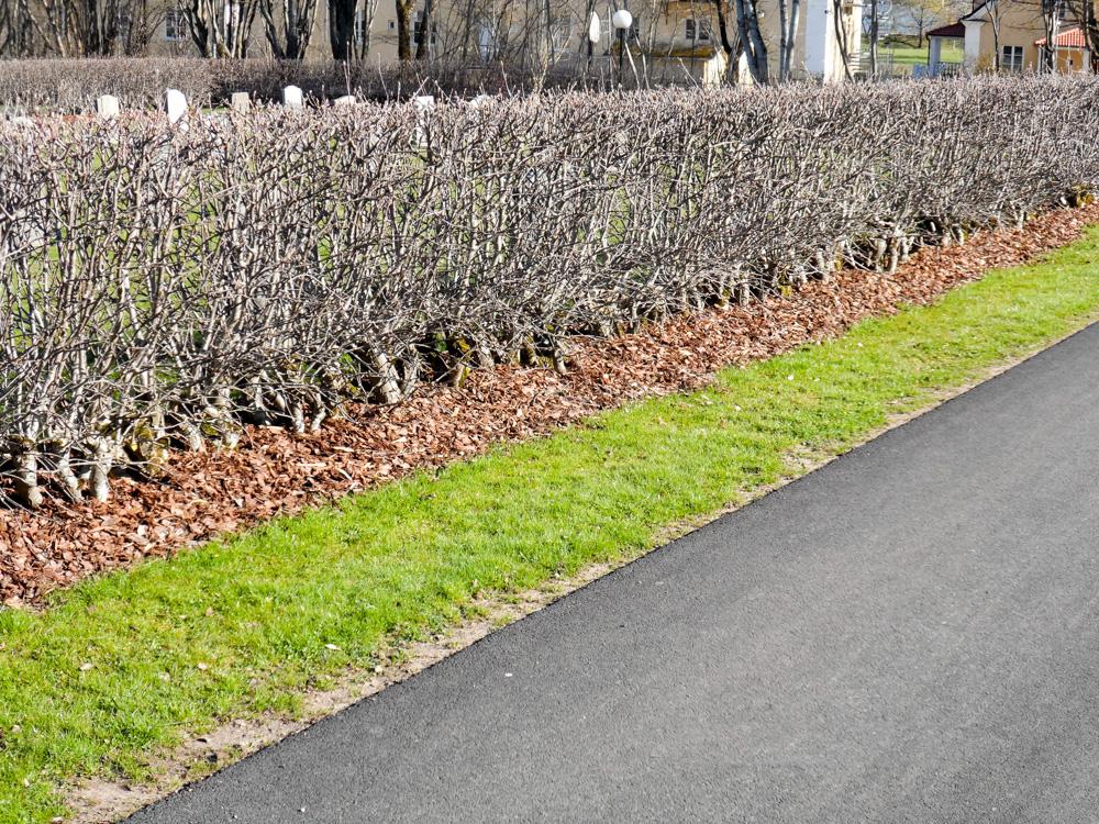 Täckning med färsk furubark kyrkogården Skövde